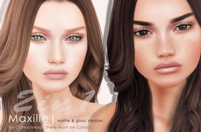 Maxille Vendor